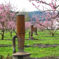 Smudge Pots in a fruit orchard