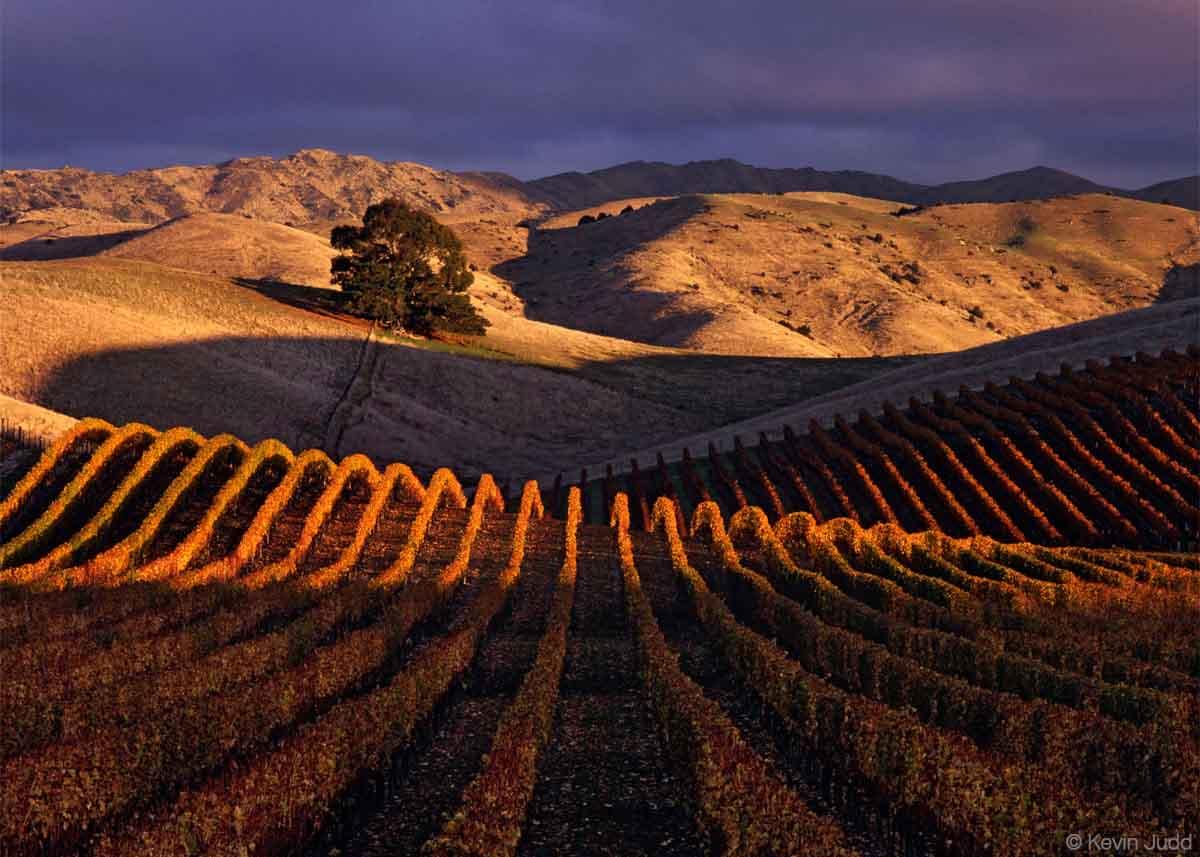 Southern Valleys Vineyards