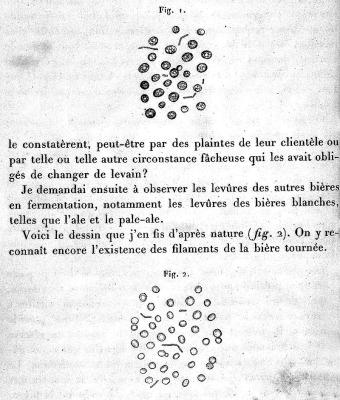 Louis Pasteur's illustrations of bacteria colonies in beer