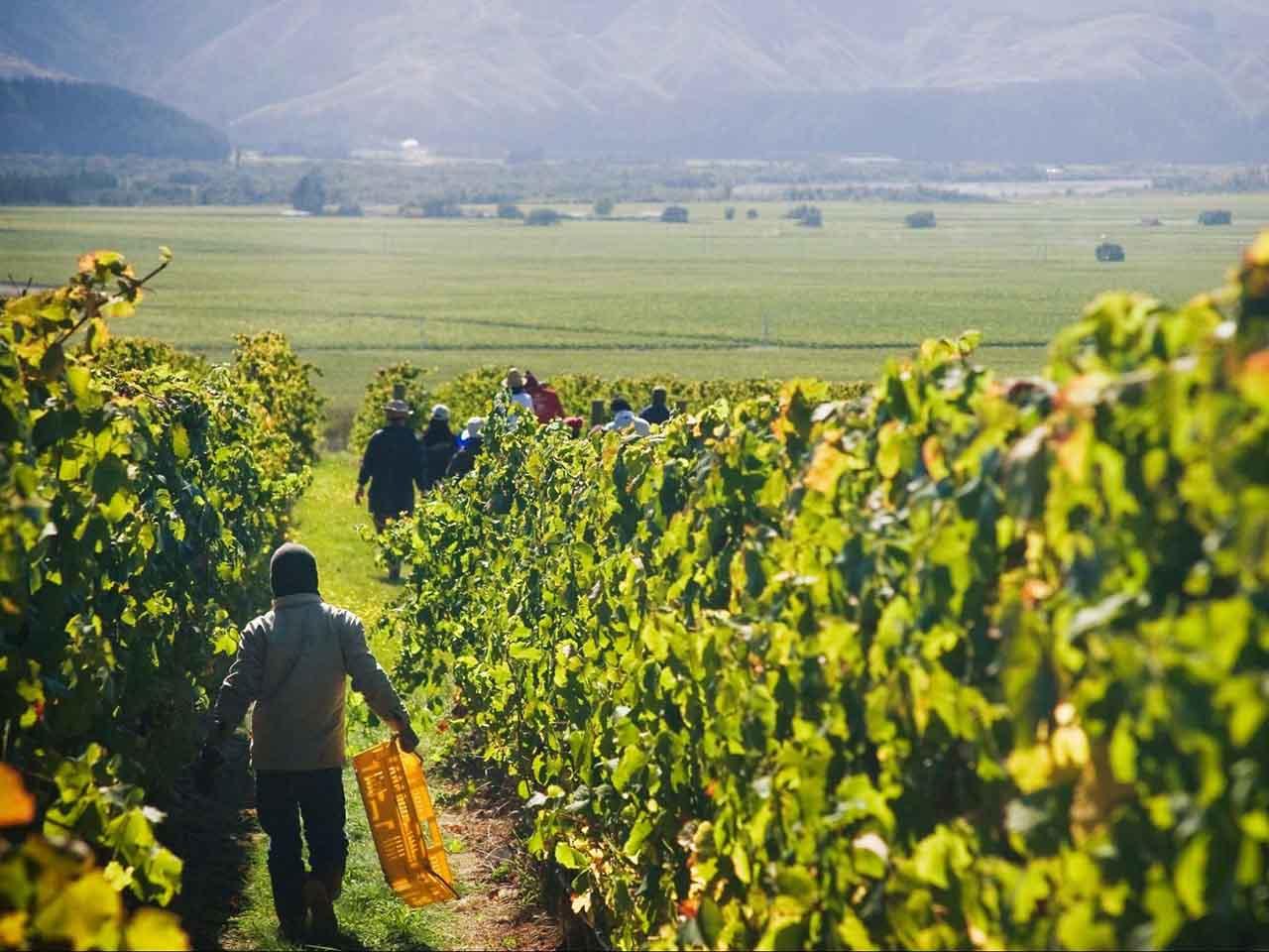 Clos Henri vineyards