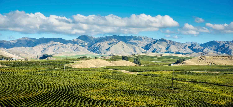 Wide angle photo of Marlborough Wine country