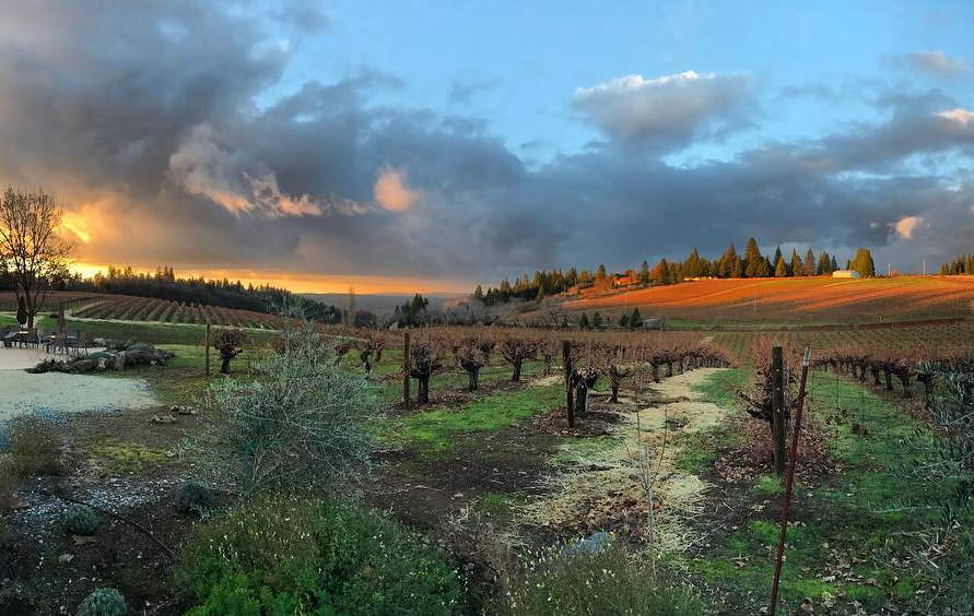 Lava Cap Winery Vineyard in El Dorado Sierra Foothills, California