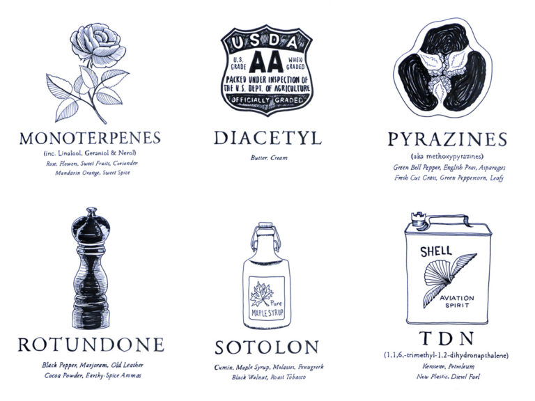 aroma-impact-compounds-wine-folly-illustrations