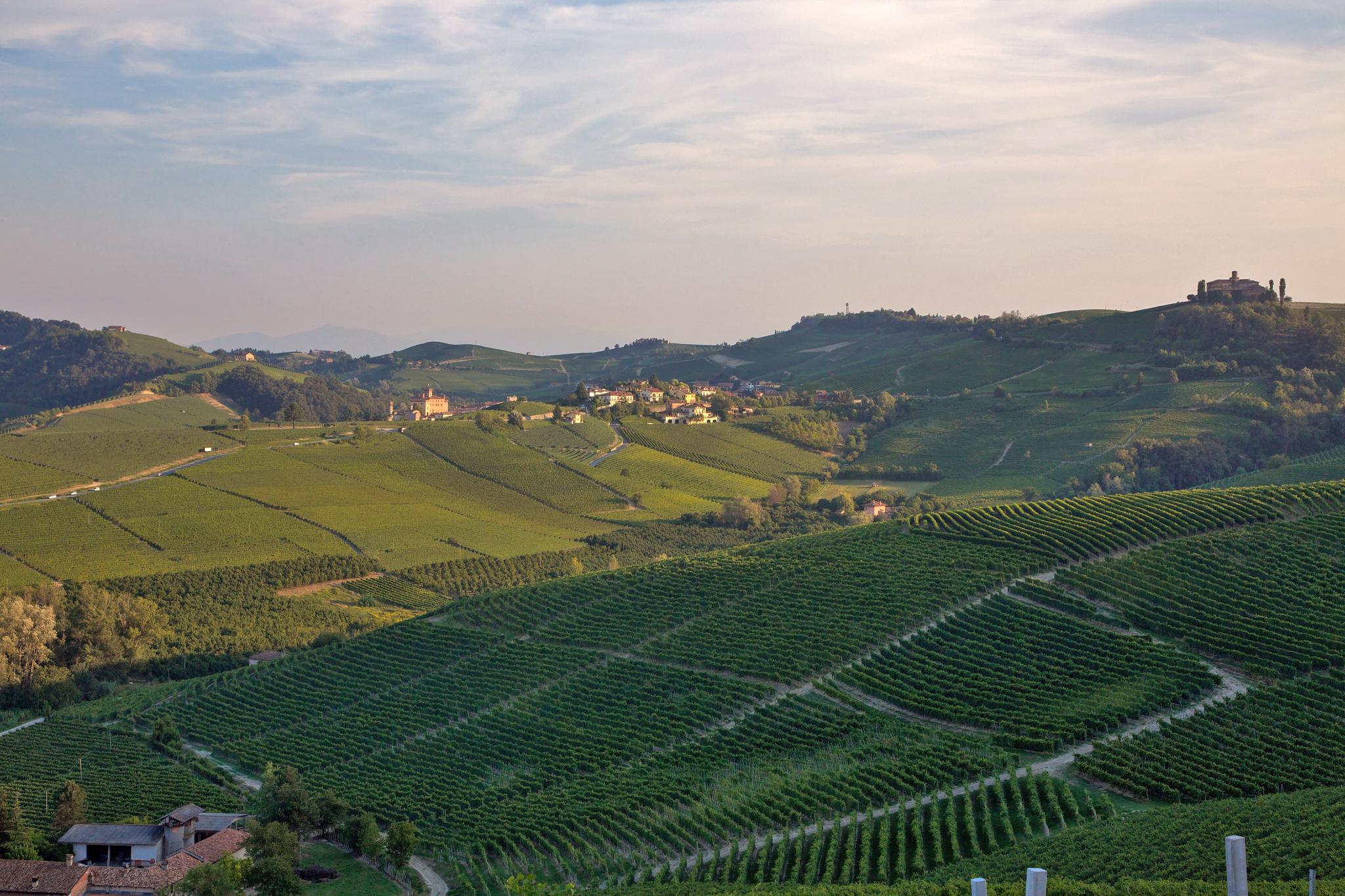 Barolo piedmont vineyards