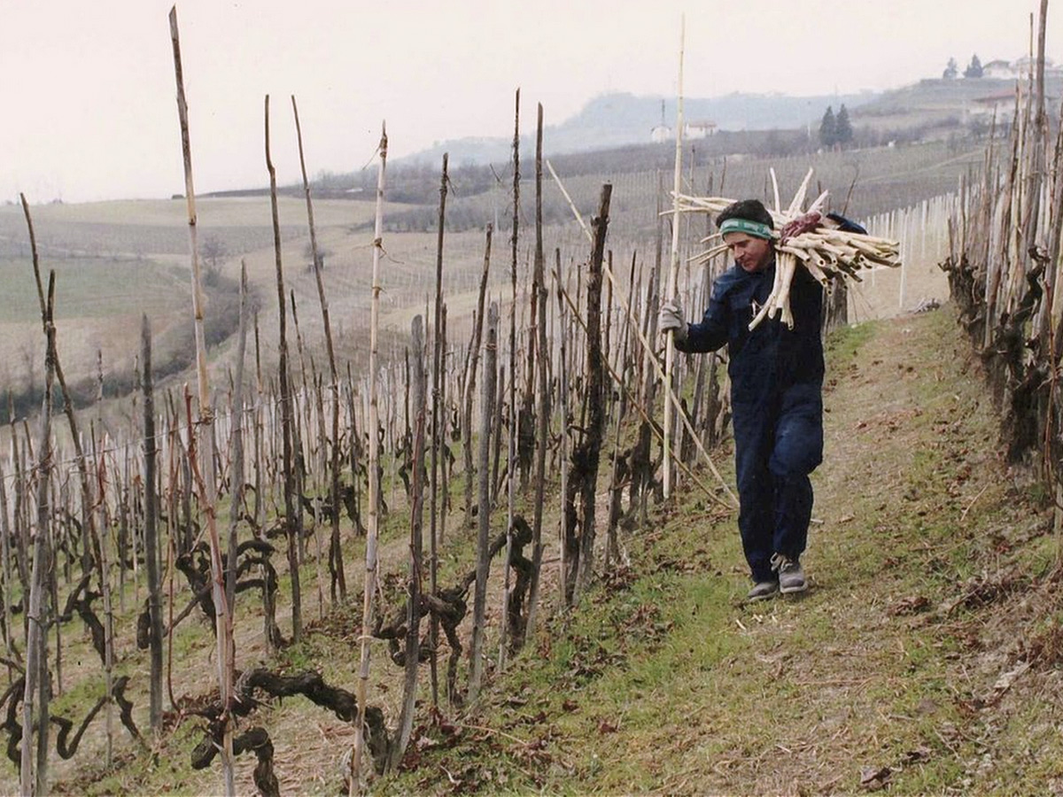 Barolo-Vineyards