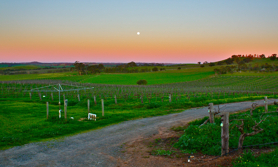 Barossa-Valley-Vineyards-kyle-taylor