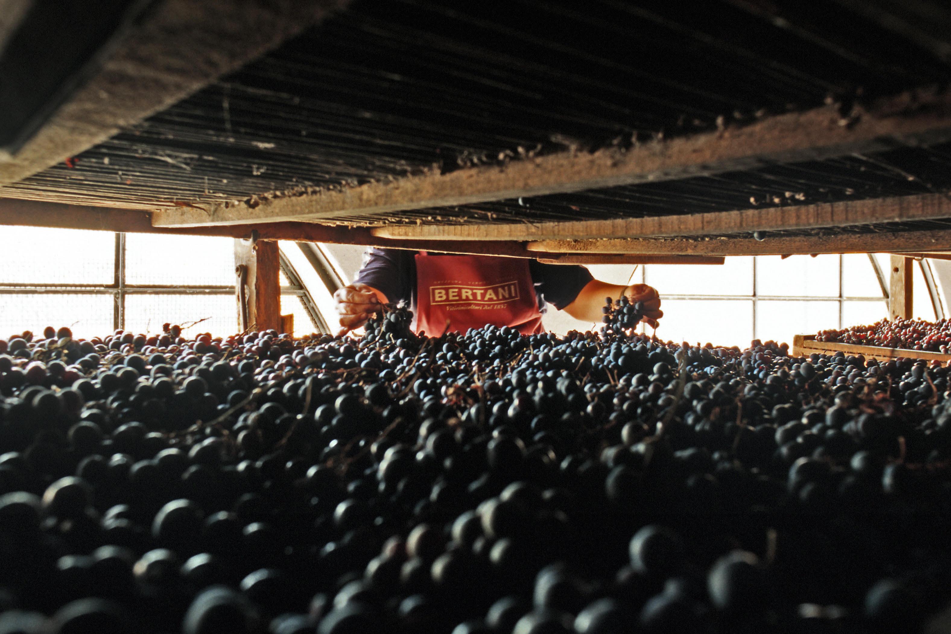 Bertani-drying-lofts-amarone-apassimento