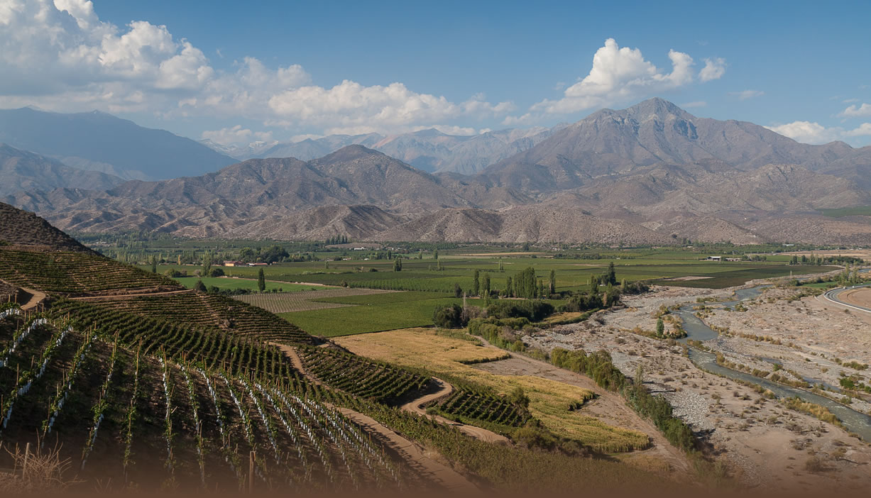 Vina San Esteban in Aconcagua region of Chile