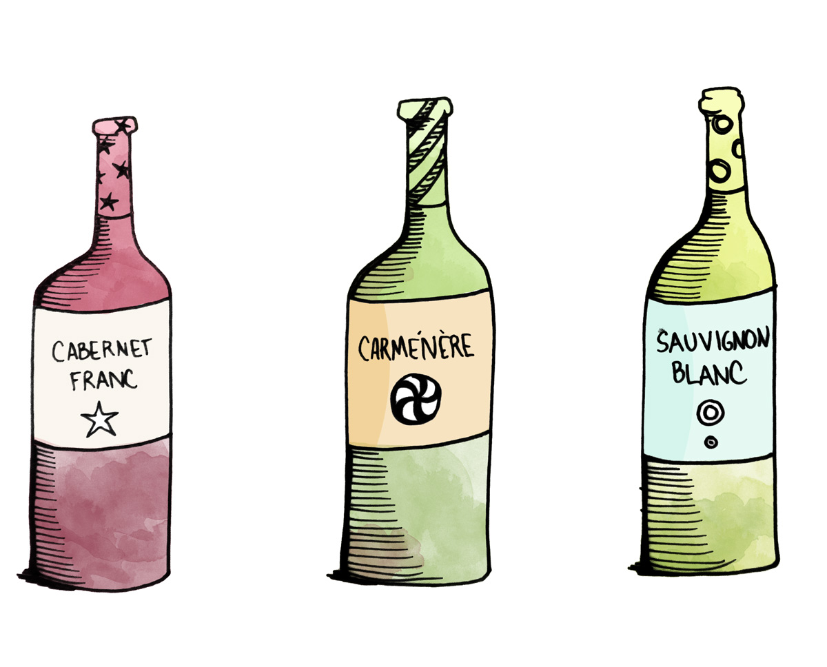 Cabernet Franc, Carmenere and Sauvignon Blanc Illustration by Wine Folly