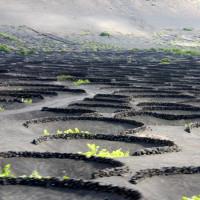 Canary Islands Vineyards volcanic soils Jose Pastor