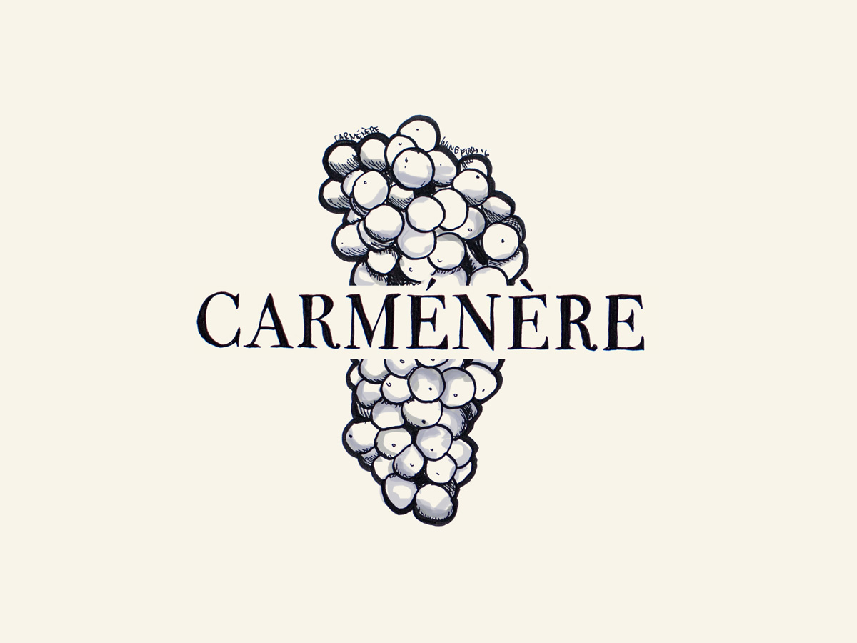 Carmenere wine grapes illustration - Wine Folly