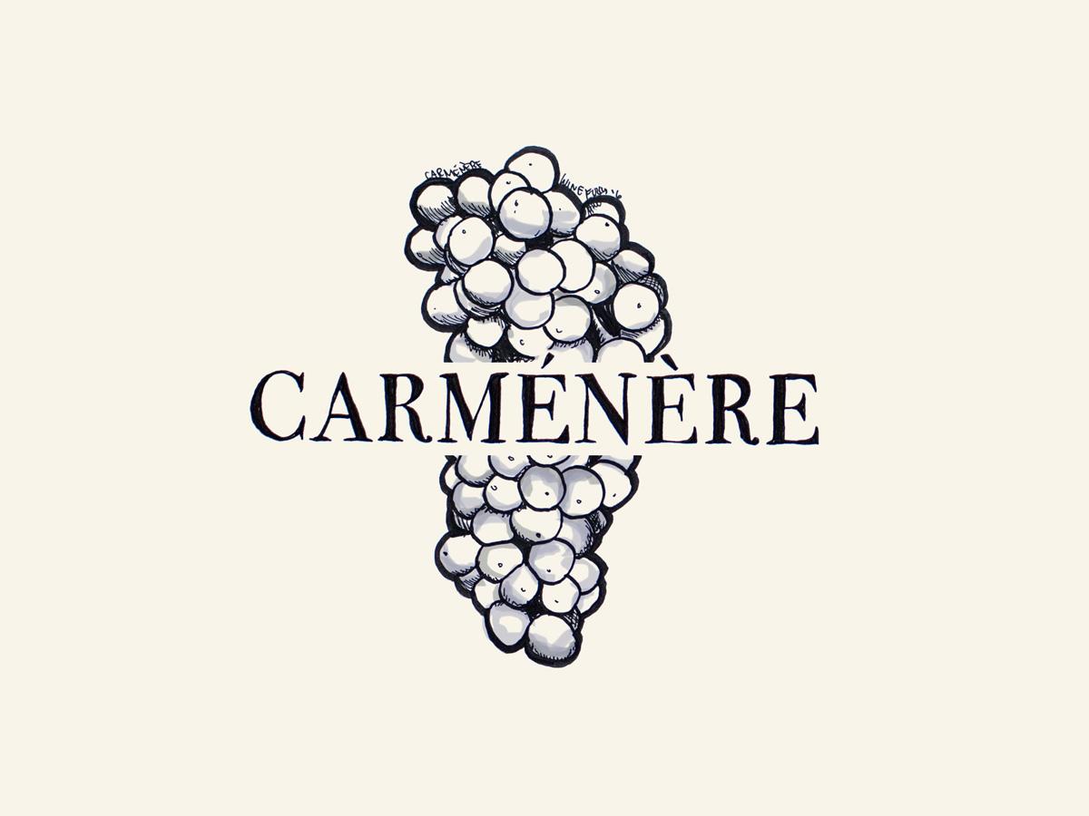 Carmenere wine grapes illustration - Wine Folly