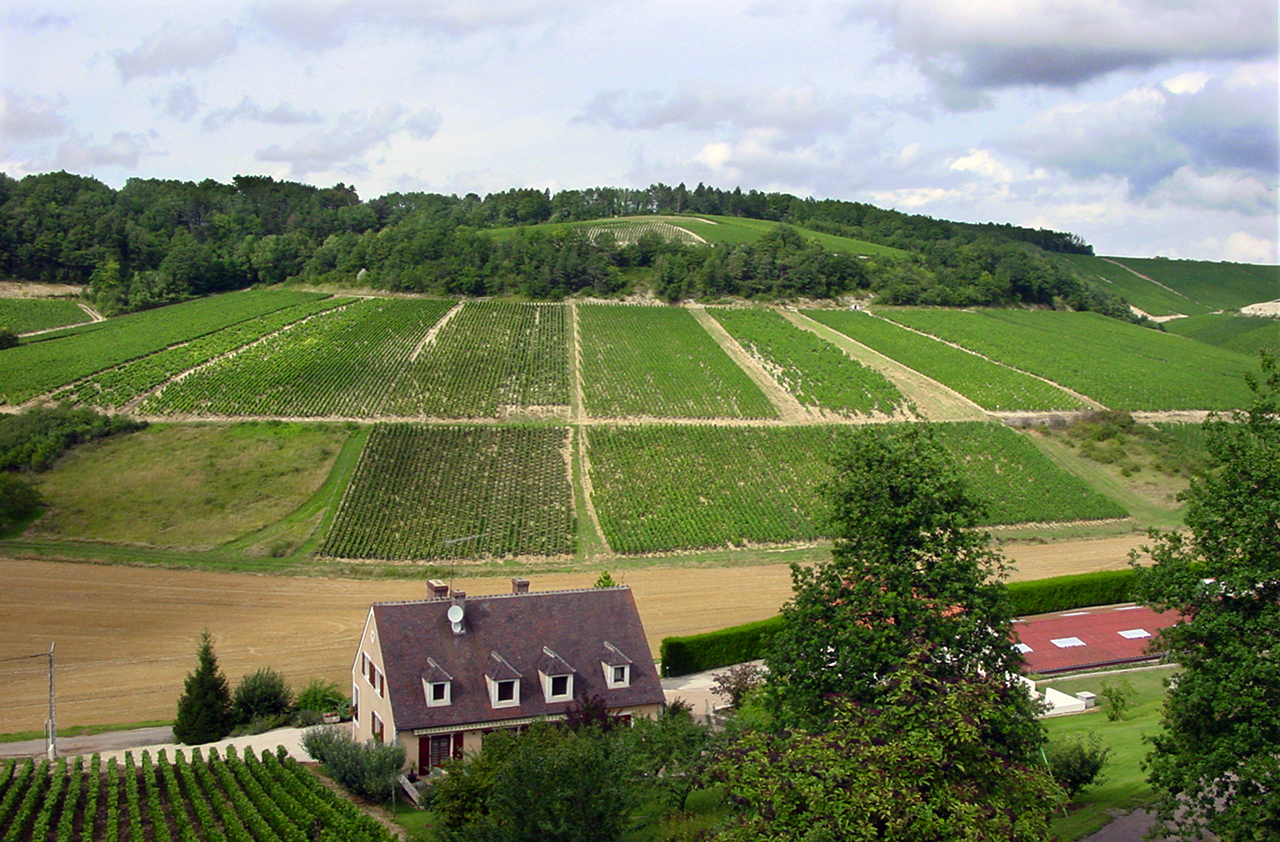 Chablis Wine Region Vineyards with Clay Marl Soils by Adnan Yahya