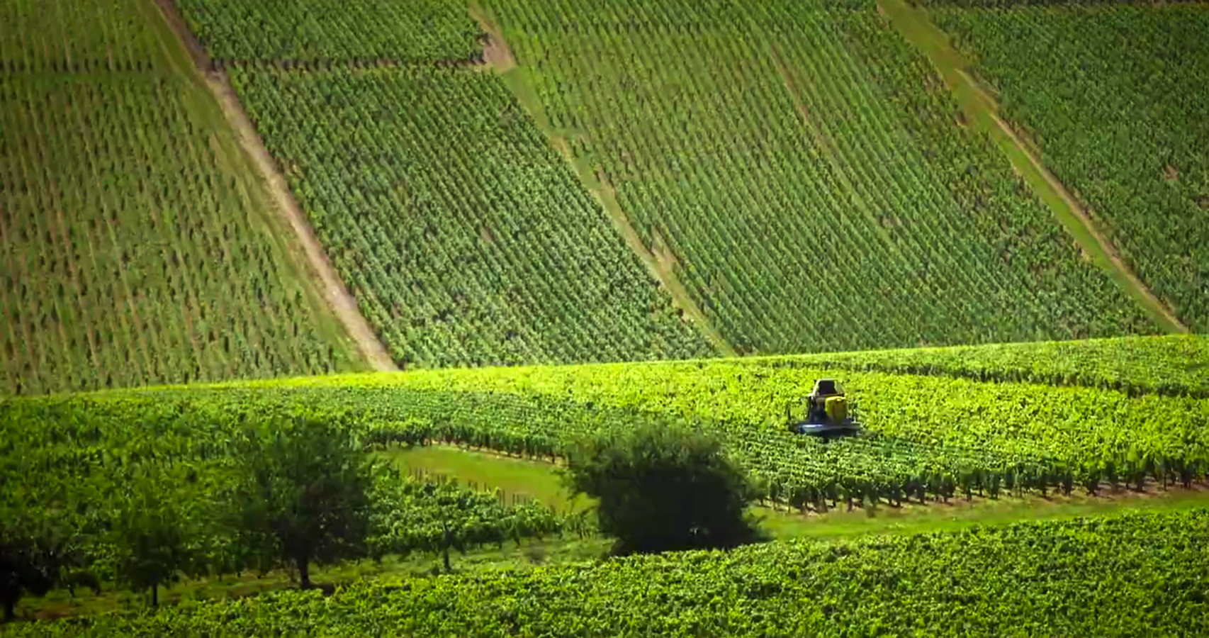 Premier Cru Chardonnay vineyard, Vaillons, in Chablis