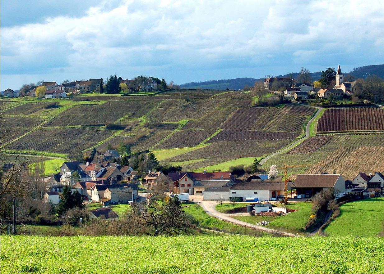 Côte Chalonnaise Burgundy Wine Region Picture