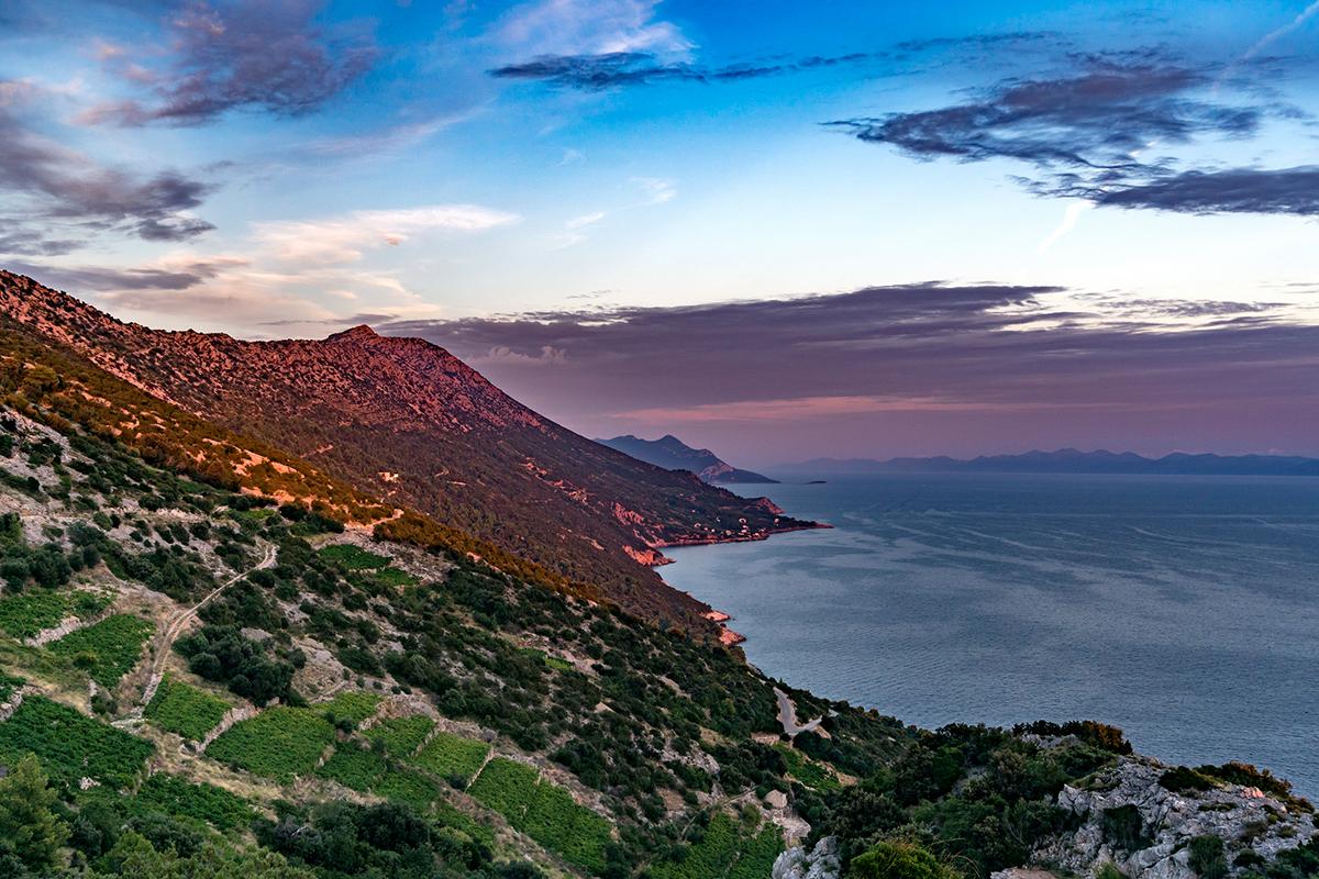 The vineyards of Croatia in Dalmatia in Pelješac in Dingač by Marz88