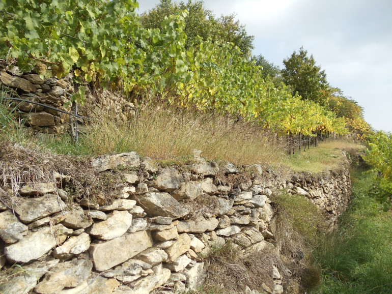 Dry Terraces of the Wachau Valley Wine region of Austria by Lindsay Pomeroy