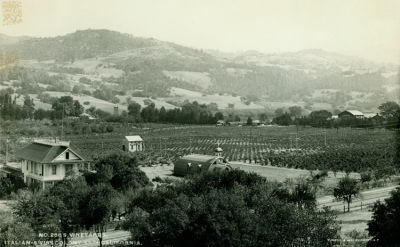 Vineyards, Italian-Swiss Colony, Asti, California