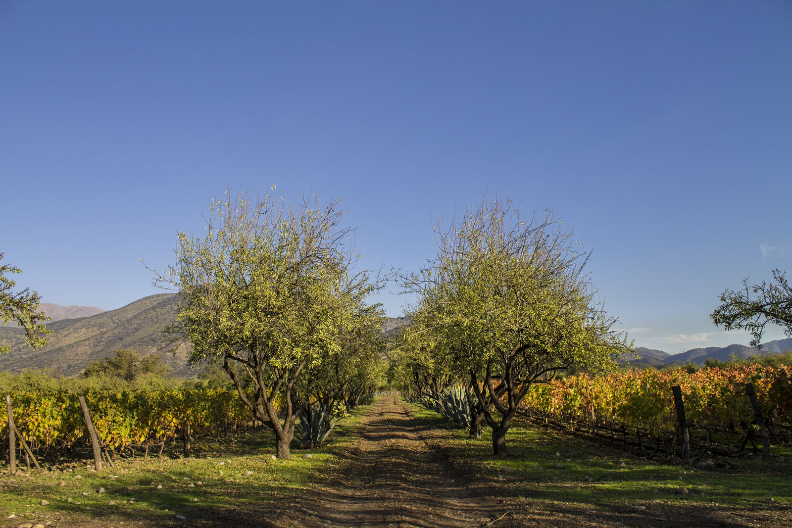 Antiyal in Maipo region of Chile is a biodynamic estate