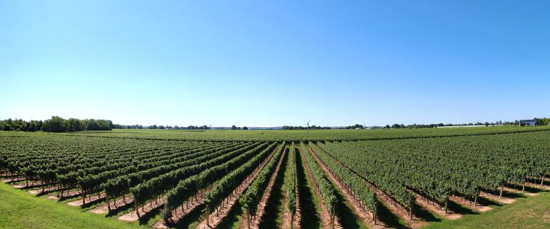 Fabio-Neves-Lake-Erie-Vineyards-in-New-York