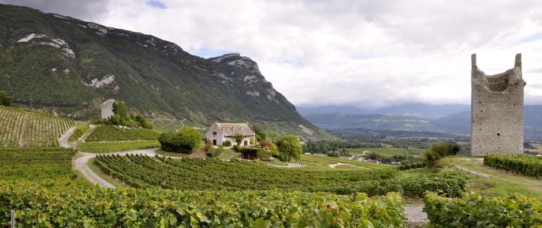 Flou-Net-Chignin-Savoie-Vineyards-Chambery1