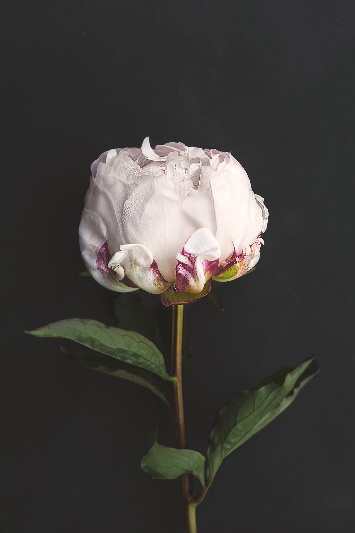 Flower-Ananda-Escudero-Gomes