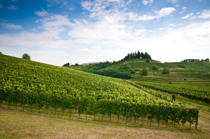 Collio Wine Vineyards Friuli by Andrea Bulfone