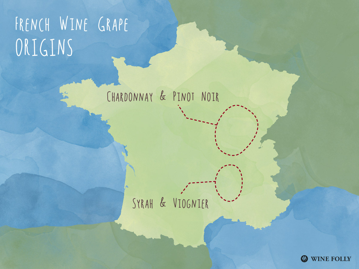 Origins of Pinot Noir and Chardonnay compared to Viognier and Syrah