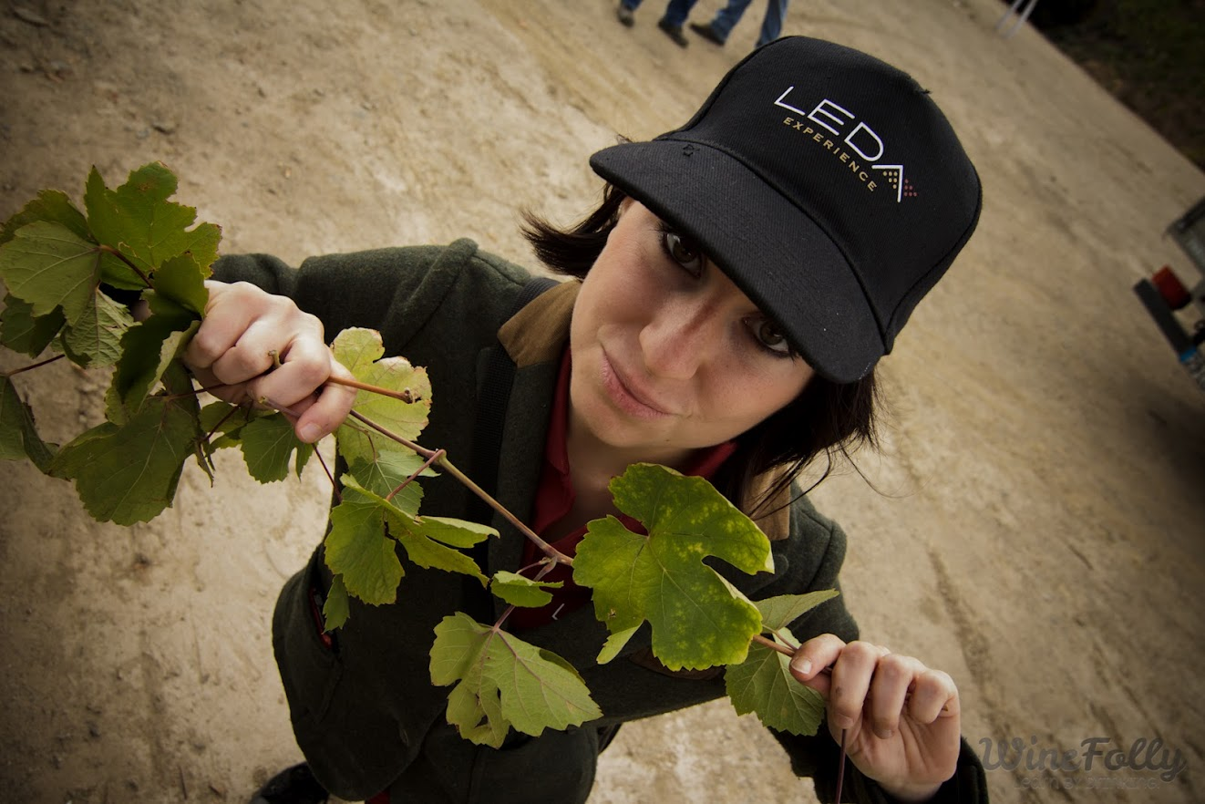 Madeline Puckette holding Touriga Franca vines