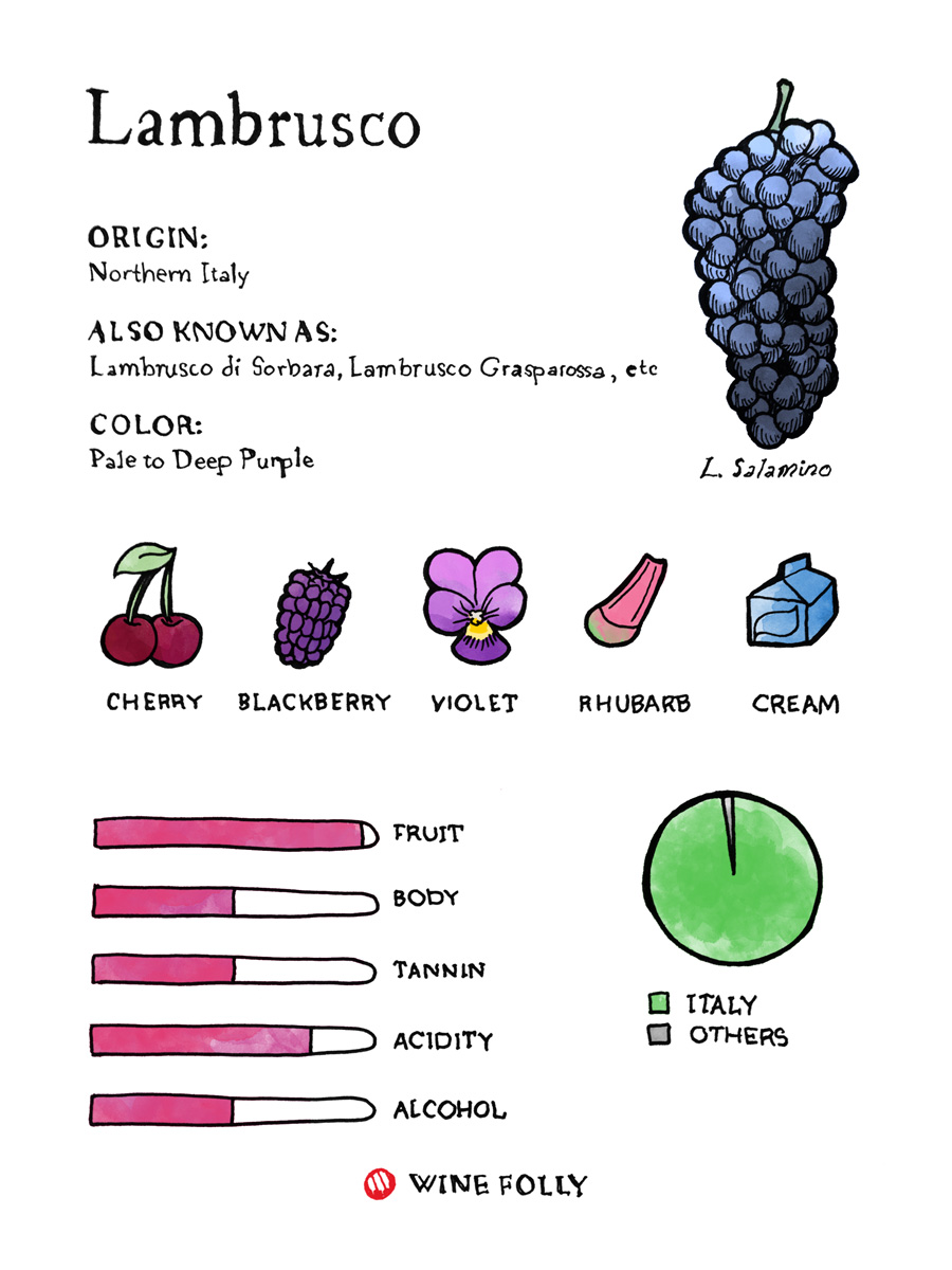 Lambrusco Wine Taste Profile with Grape Illustration by Wine Folly