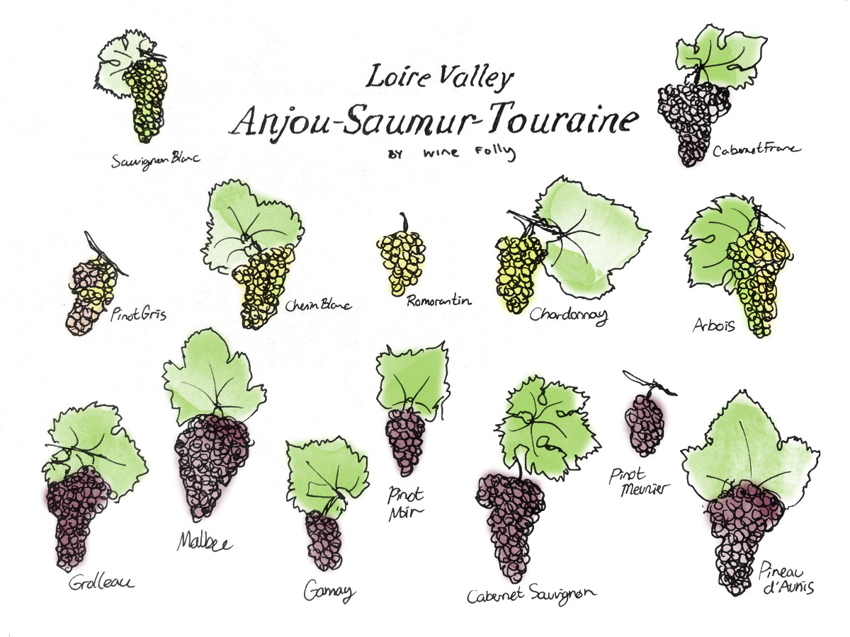 Middle Loire Valley Wine Grape Varieties by Wine Folly