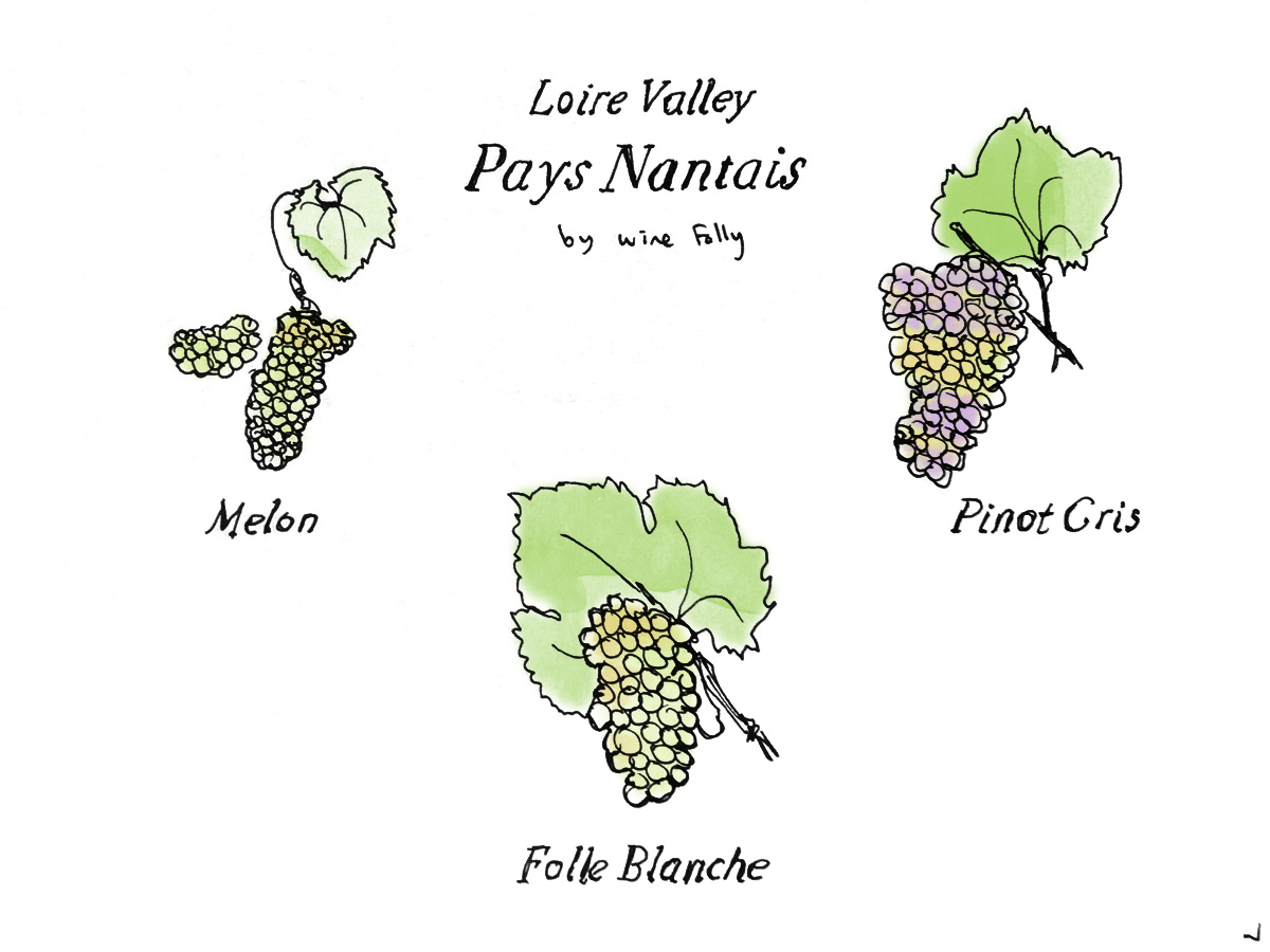 Lower Lower Pays Nantais Wine Grapes by Wine Folly