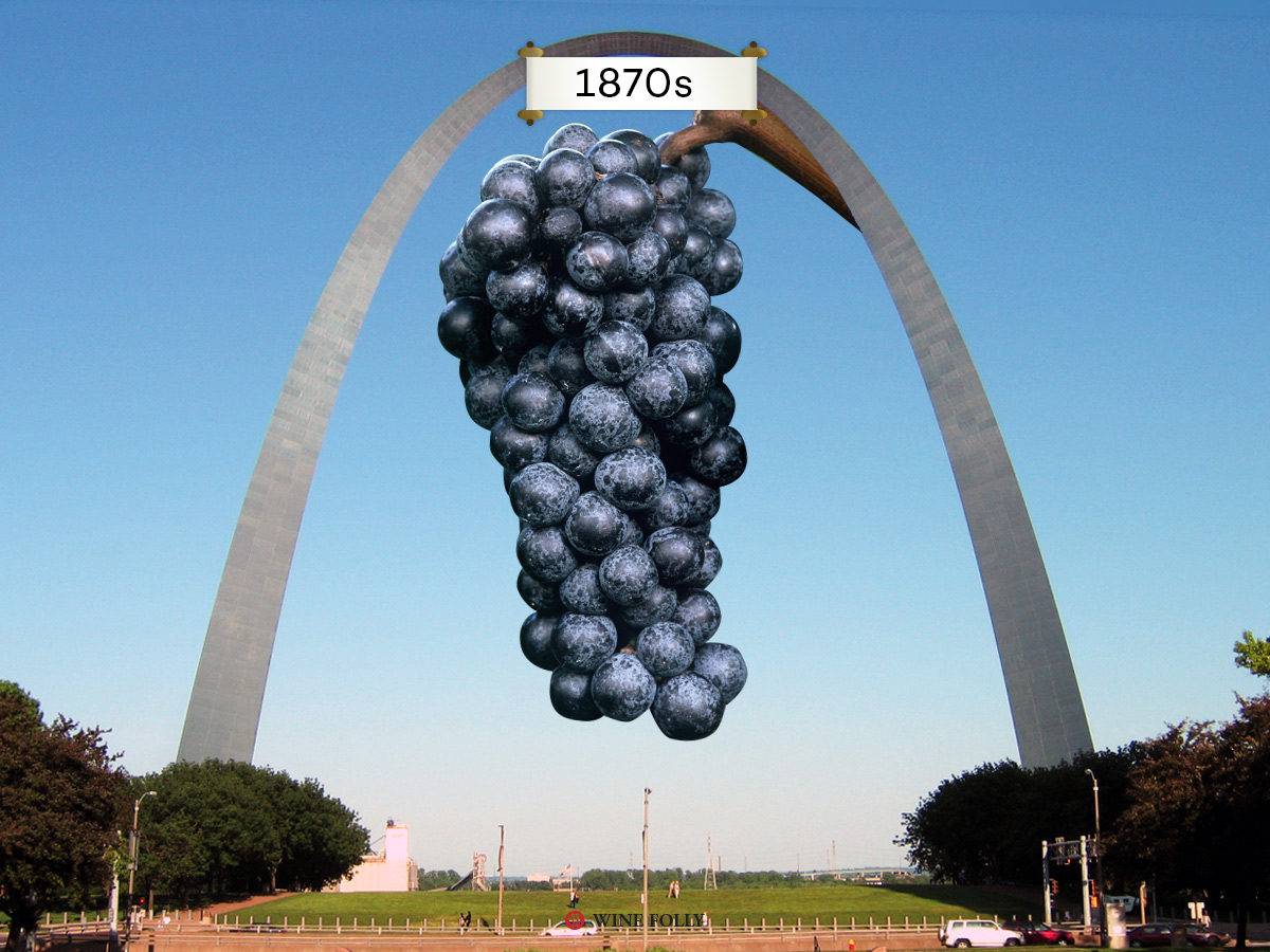 We can thank Missouri for saving the wine world in the 1870s