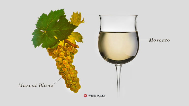 Moscato Wine in glass and Muscat Blanc Grapes Illustration by Wine Folly