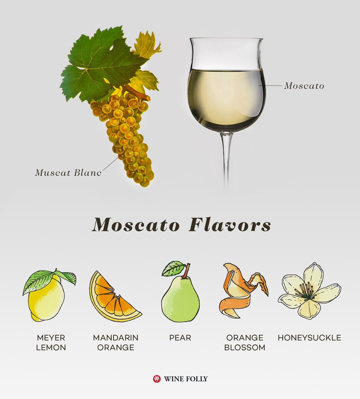 Moscato Bianco Taste Profile infographic by Wine Folly