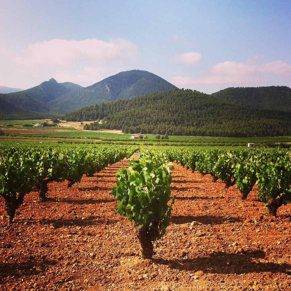 Murcia-old-vine-monastrell-yecla-spain