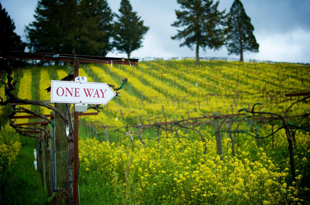 Napa-Sonoma-Vineyards-mustard-Robbin-gheesling