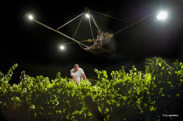 Night Harvest Chardonnay in Sicily at Donnafugata
