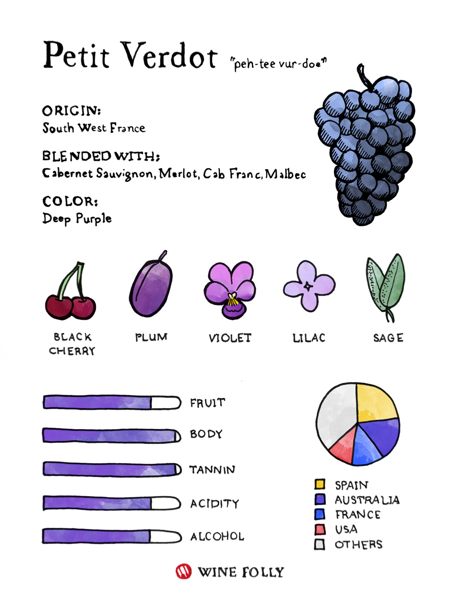Petit Verdot Grapes Illustrated Taste Profile by Wine Folly