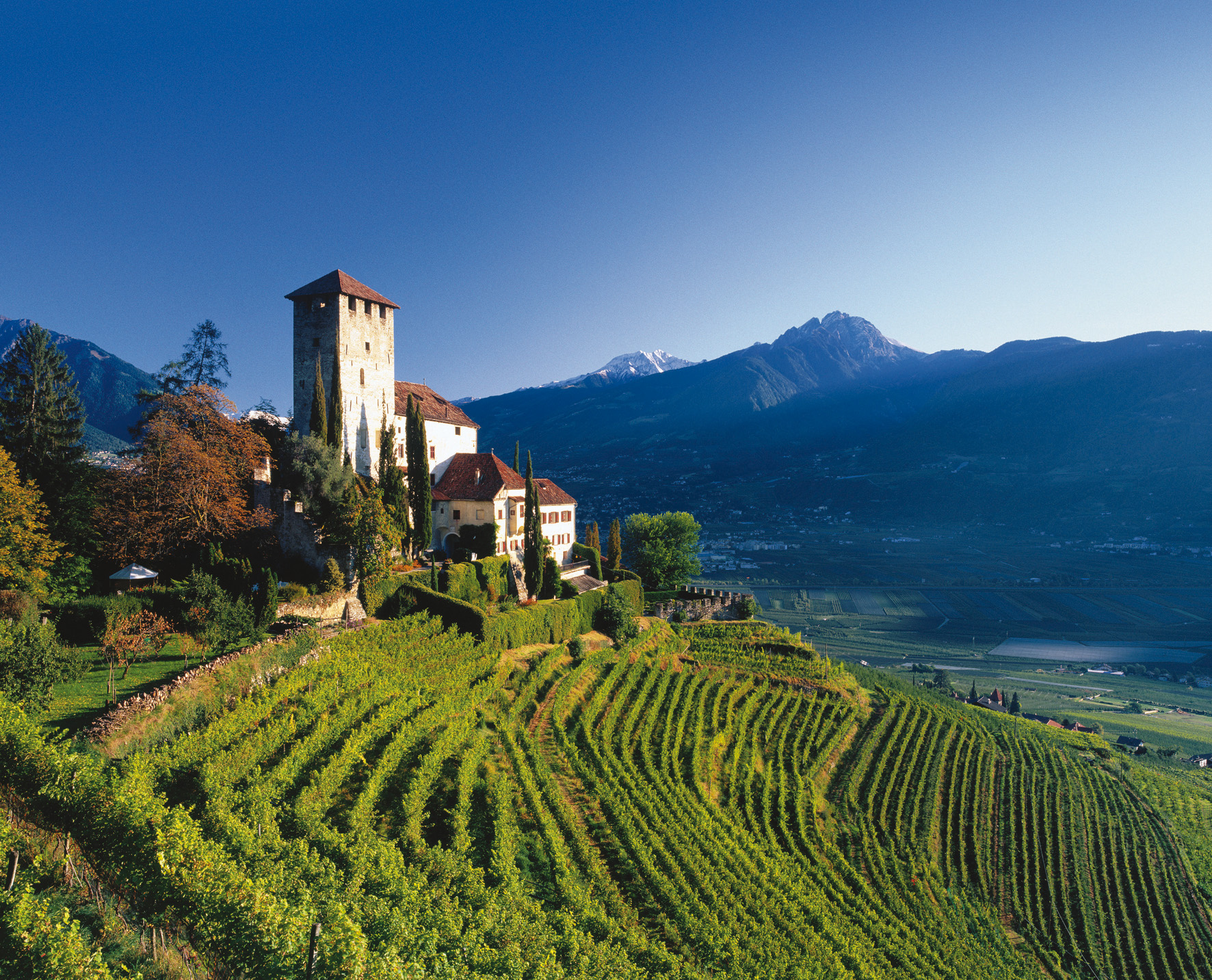 Schloss-Lebenberg-alto-adige-italian-pinot-grigio