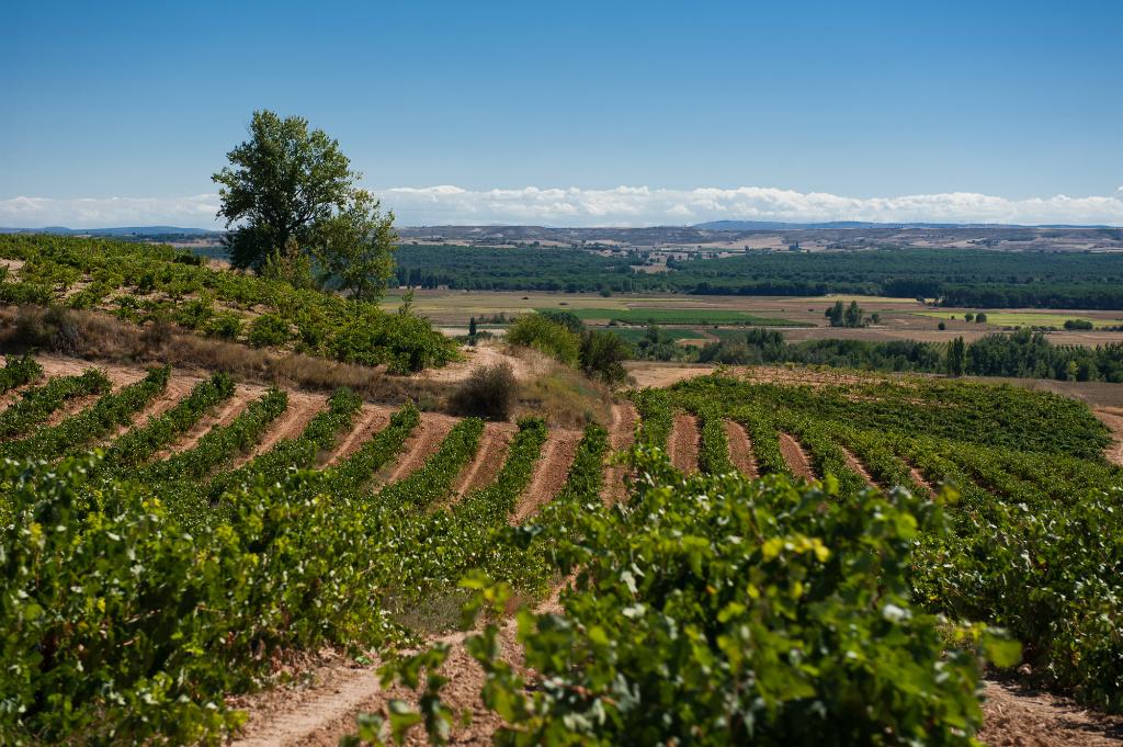 Ribera del Duero wine region Ines Vizcarra Ole Imports