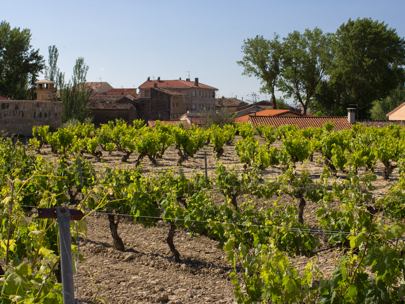 Old vineyards at Bodegas Castillo de Sajazarra in Rioja Alta