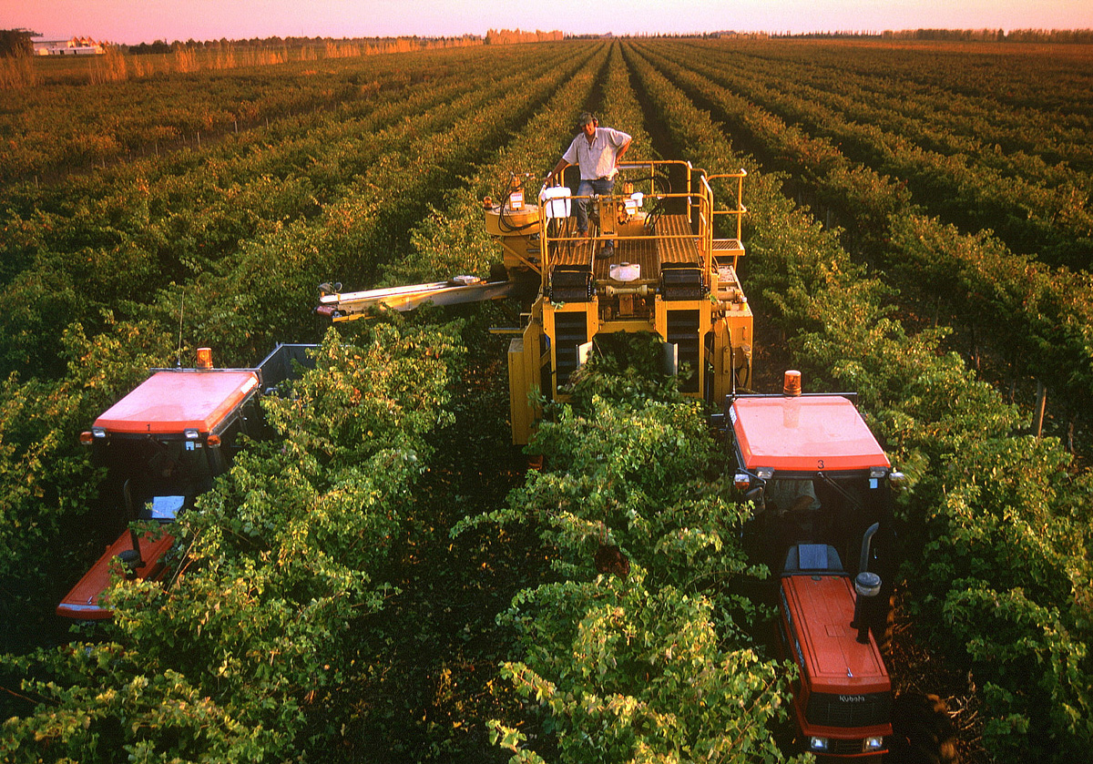 Roderick-Eime-Coonawarra-Cabernet-Harvest-machine-Australia