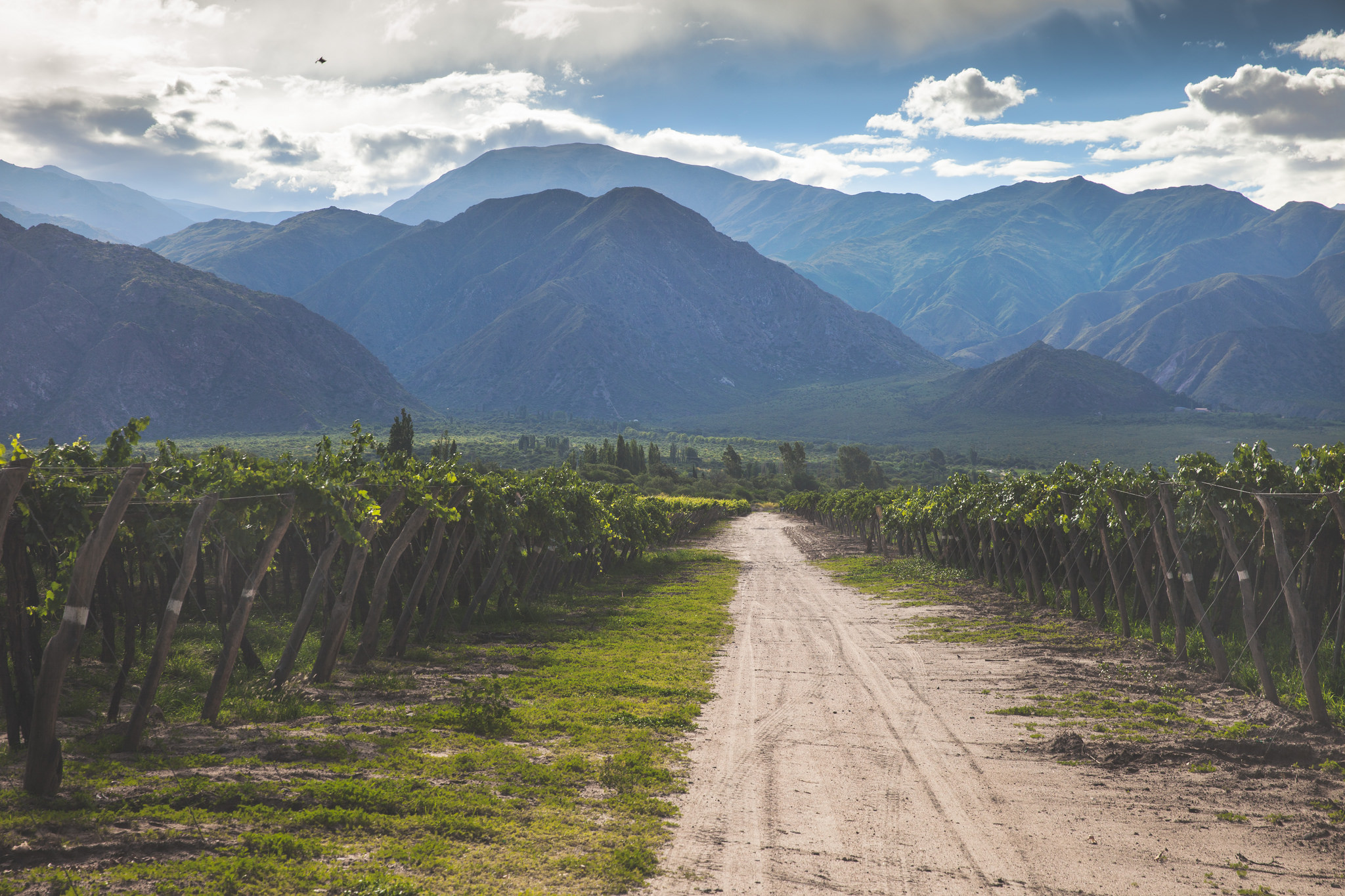 Salta-Cafayate-Torrontes-Vineyards-Argentina-Chris-Ford