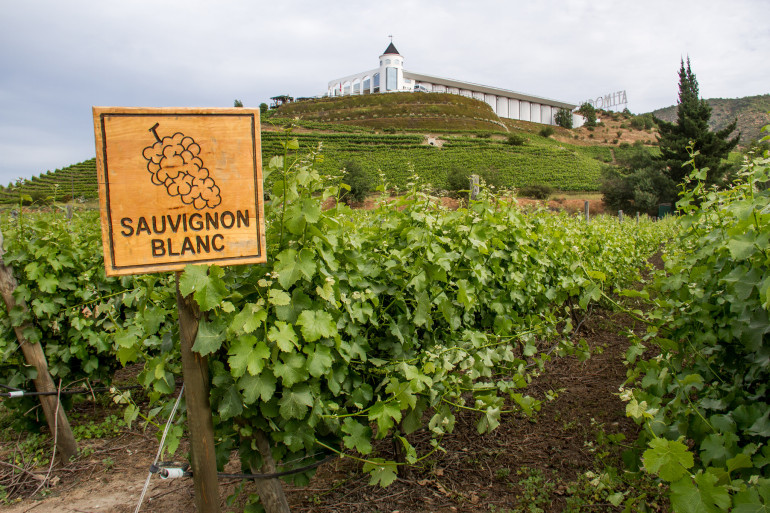 Sauvignon-Blanc-Vineyards-Chile-CocombreLibre