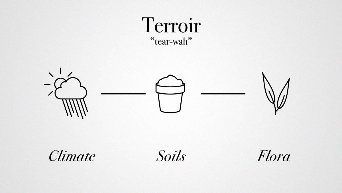 What is Terroir in wine