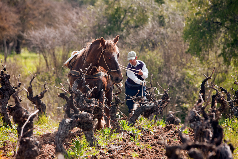 Small production winemakers by Matt Wilson