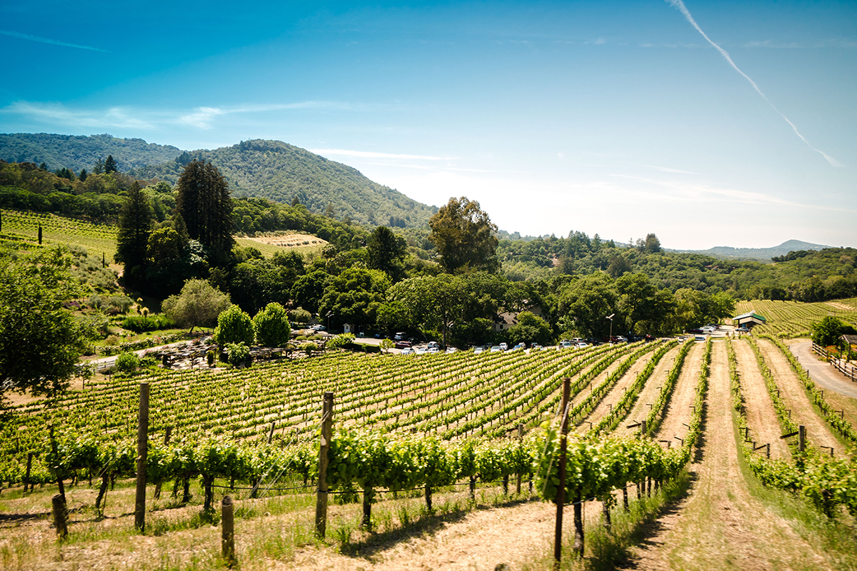 Sonoma-wine-vineyards-country-by-trent-erwin