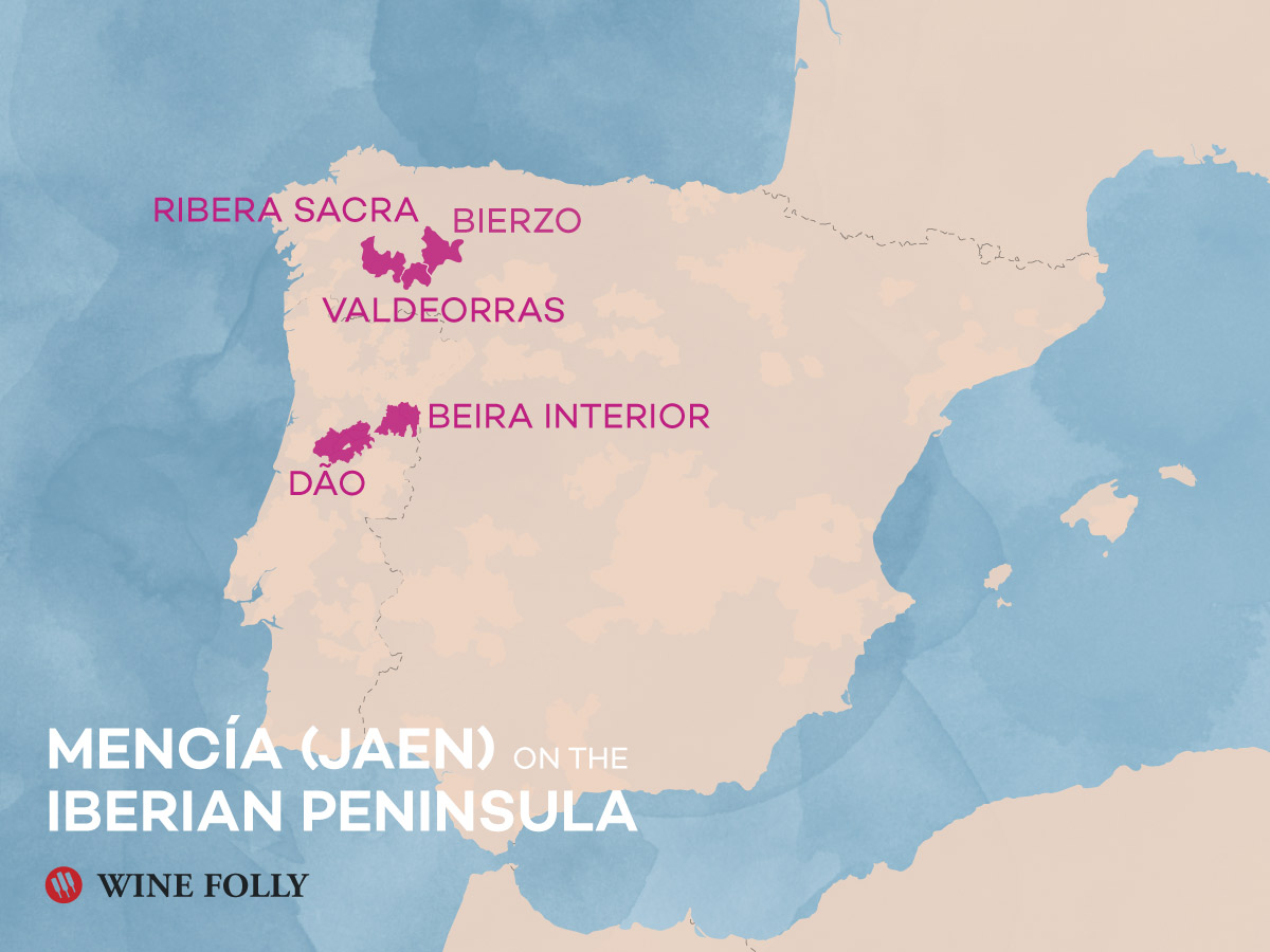 Mencia - Jaen wine regions of Spain and Portugal by Wine Folly