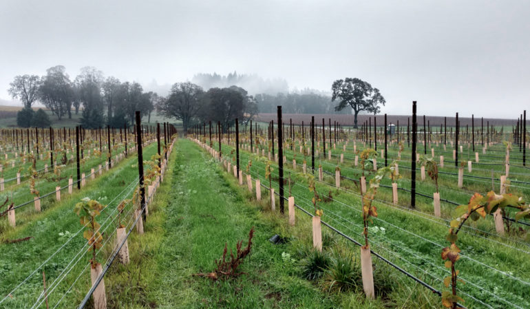 Stoller-young-vines-dundeehills-1